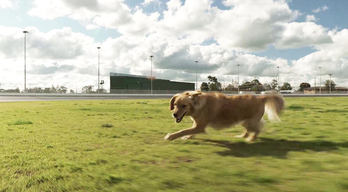 狗關節保健 / 使用關節神仙粉之後,狗狗都可以自由自在地跑跑跳跳!
