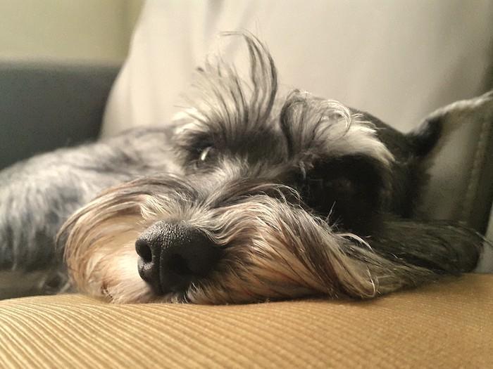 15歲老狗一直唔肯行,食咗神仙粉!而家唔再日日瞓喺度!   狗狗健康