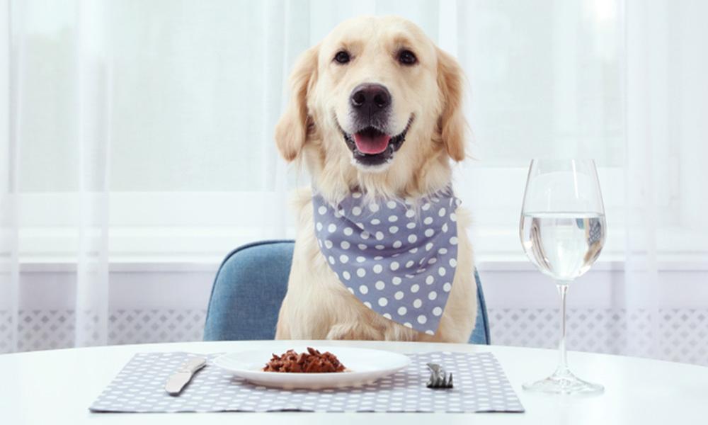 狗狗補鈣好重要?3點極速了解鈣質與毛孩的關係!鮮食/狗糧/豬肉/牛肉/金毛/開餐/金毛尋回犬