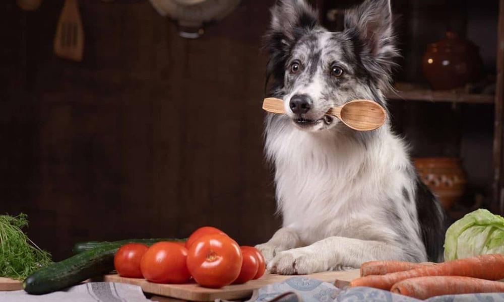 狗狗補鈣好重要?3點極速了解鈣質與毛孩的關係!/自己製作正餐比毛孩食的話,是需要有一定程度的寵物營養知識,所以一啲都唔簡單,例如以新鮮食材為主做狗狗蛋糕,餅乾或零食的。食材上有些建議給奴才們!