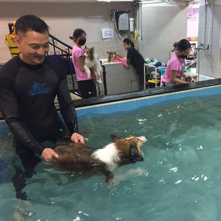 狗游泳池 | Dogaroo