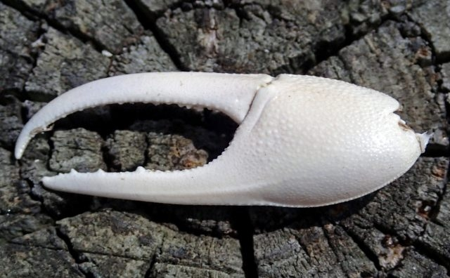 【一餐急救】系列所有成分均不含甲殼素,不會引起甲殼引致的皮膚敏感,任可人也可以使用。