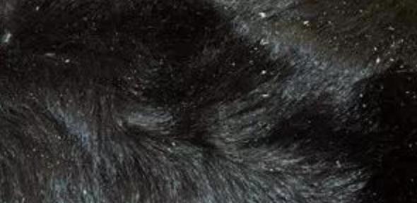 皮肤的颜色或者是质地的变化,狗狗皮肤病