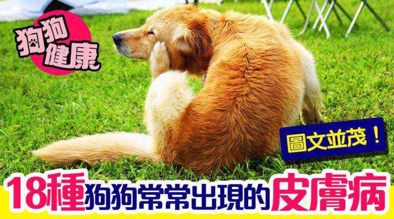 18種狗狗常常出現的皮膚病,圖文並茂