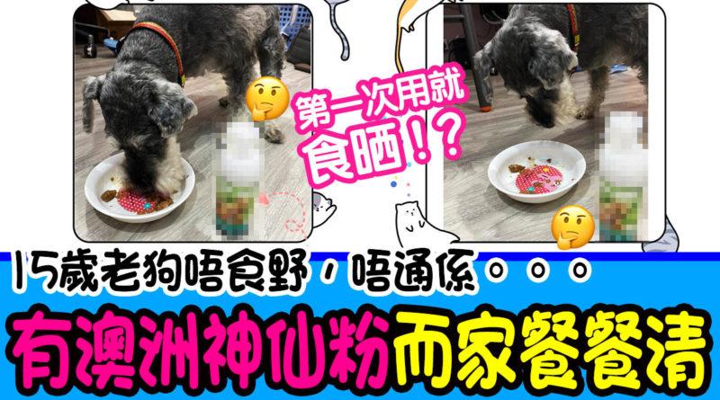 15歲老狗唔食野,唔通係。。。!好在有澳洲獸醫神仙粉,而家餐餐清 | 狗狗健康