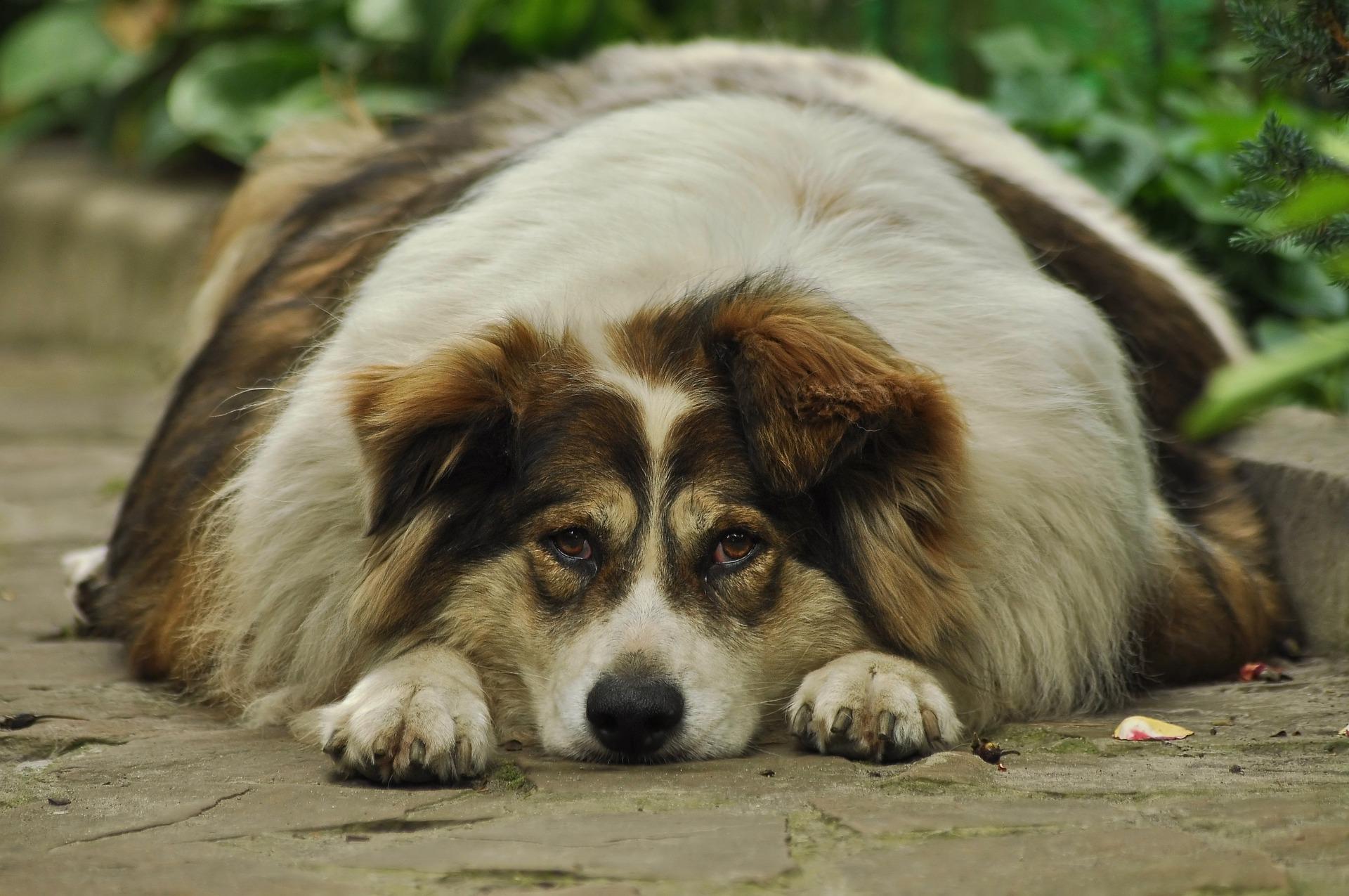 老狗後腳無力?狗狗關節退化的3大關鍵原因
